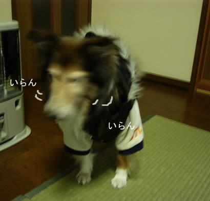 0801-2003.jpg